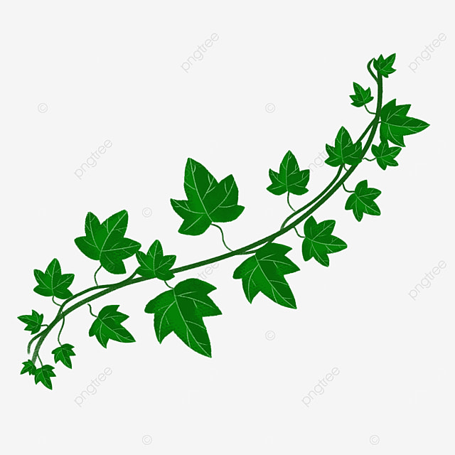 two green ivy clipart