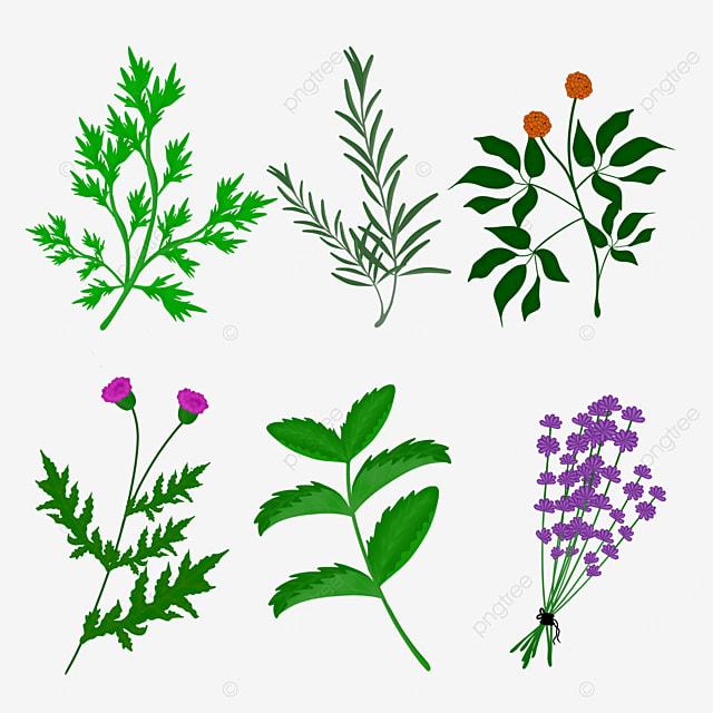 cartoon herbal plant