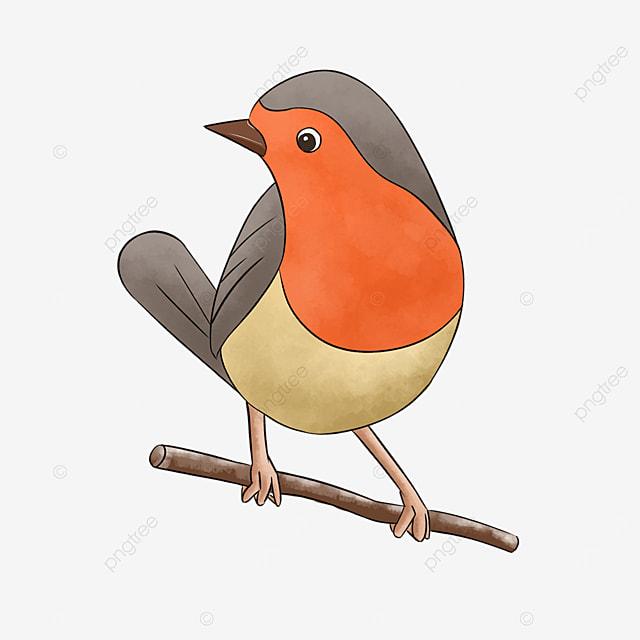 cartoon red bellied bird cute clipart robin