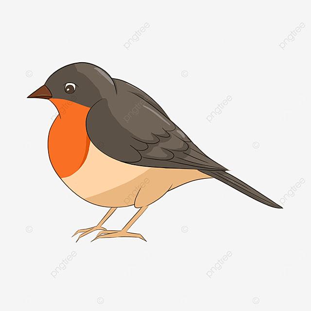 cartoon red bellied bird song robin robin clipart