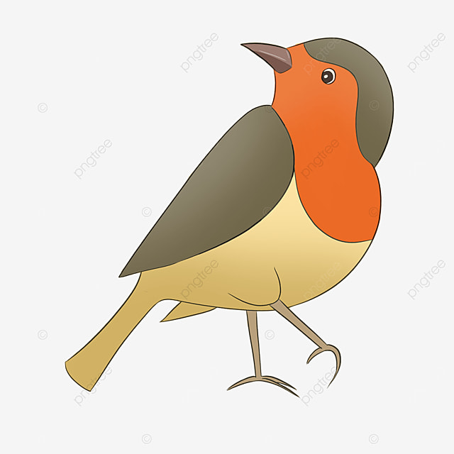 red breasted cartoon clipart cute robin