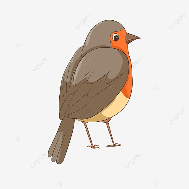 robin red breasted cute clip art