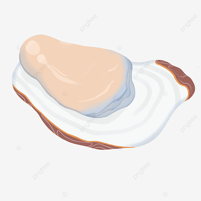 sea oysters seafood oyster clipart