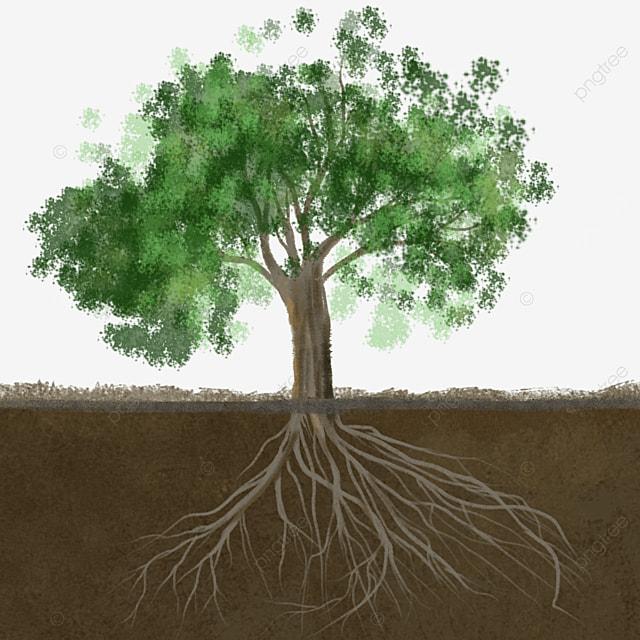big tree root clip art