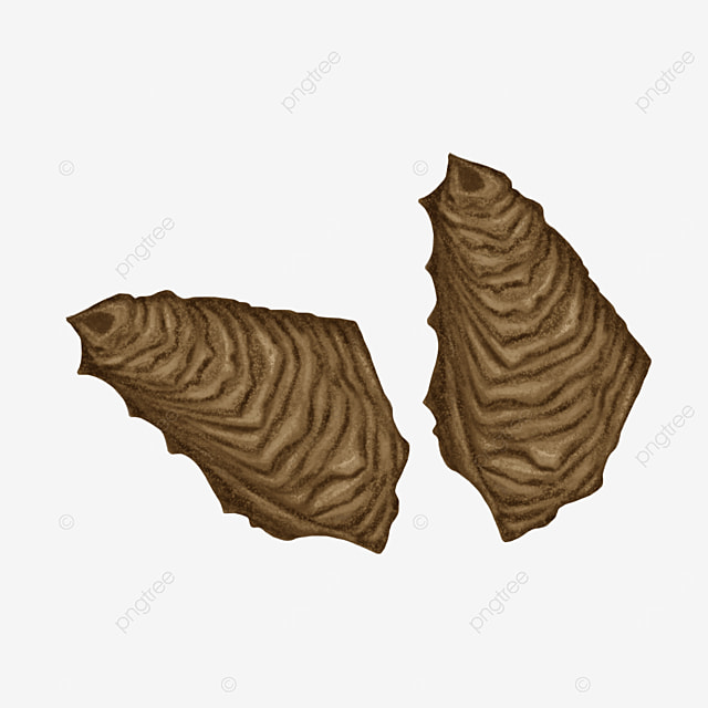 brown oyster shell clip art