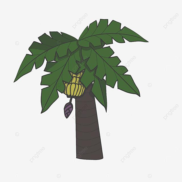 five leaf banana tree clip art