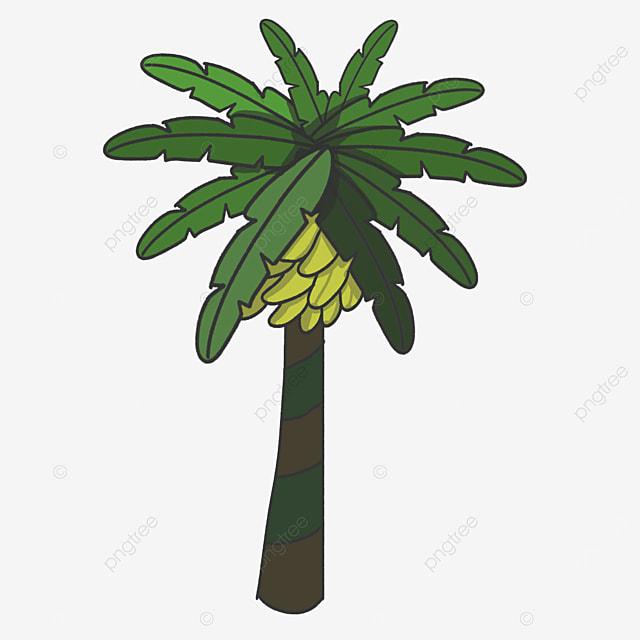 green banana tree clip art