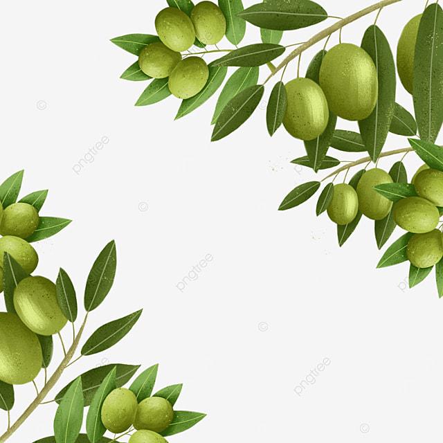 olive creative plant border