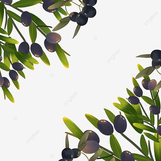 olive leaf creative border