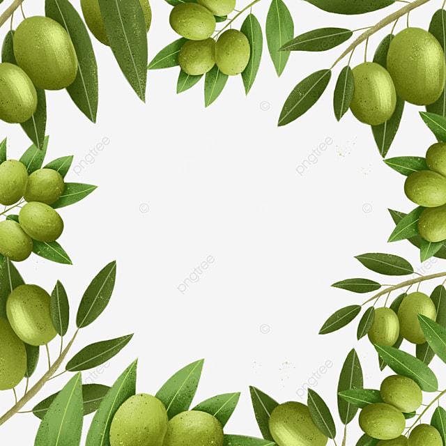 plant olive creative border