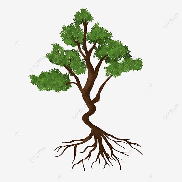 populus tree root clip art