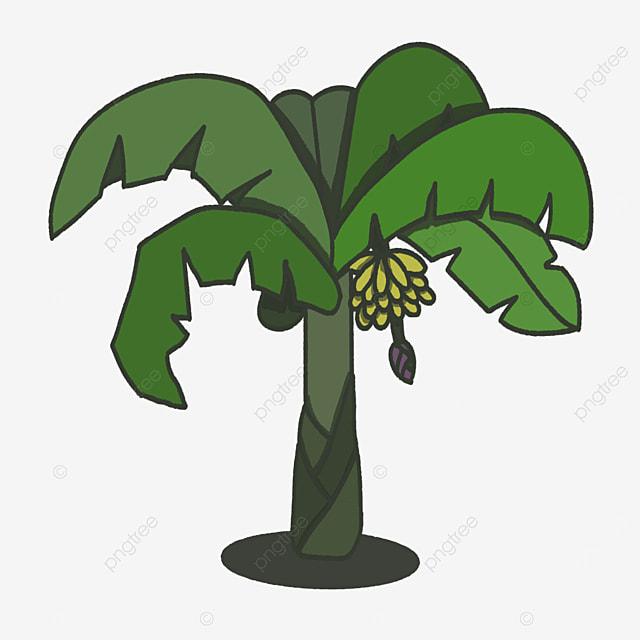 ripe banana tree clip art