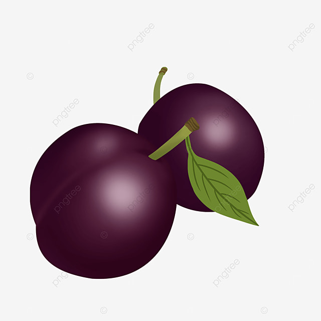two realistic fuchsia plums clipart