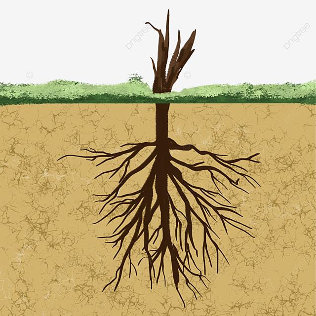 underground branch root clip art