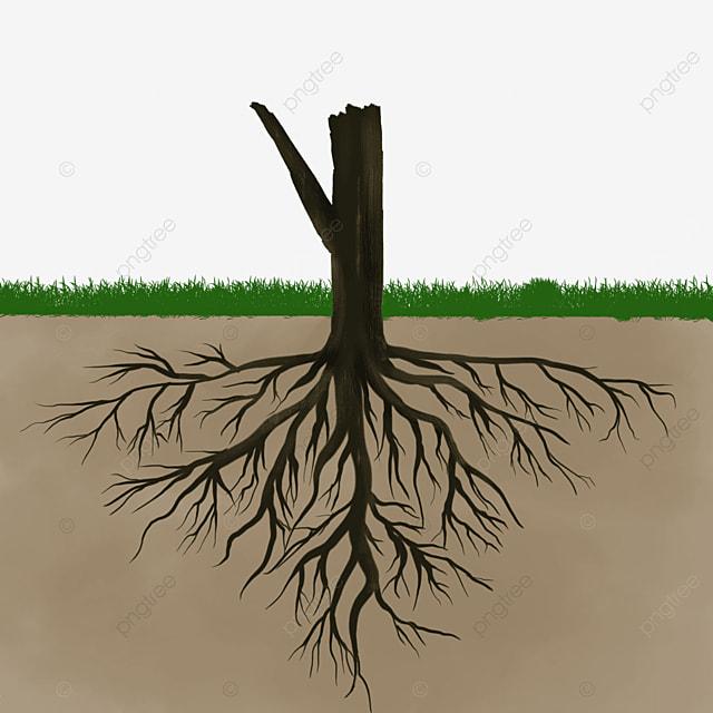 underground brown black tree root clip art