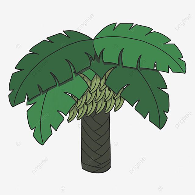 unripe banana tree clip art