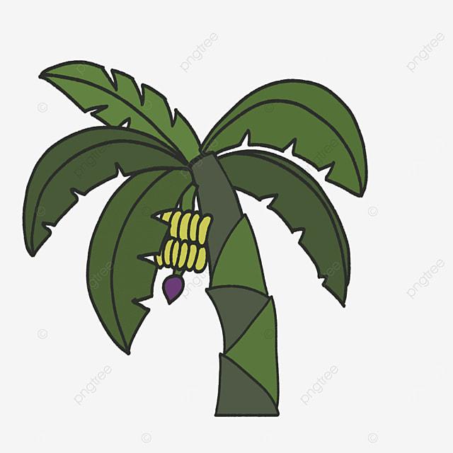 variegated banana tree clip art