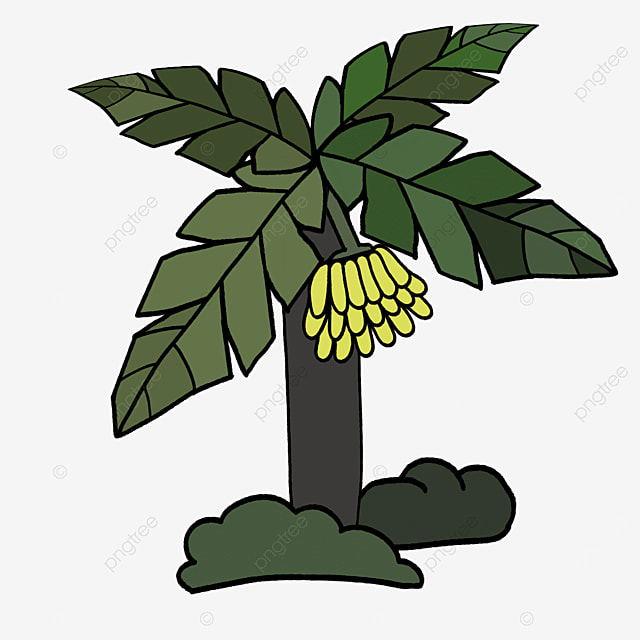 water chestnut banana tree clipart