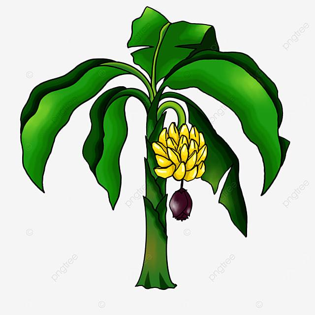 simple banana tree clipart