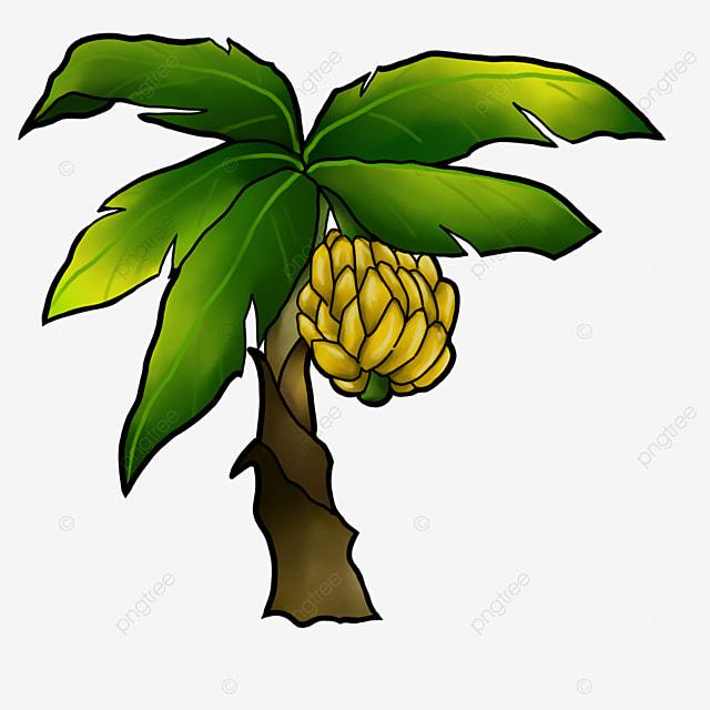 tropical plant banana tree clipart