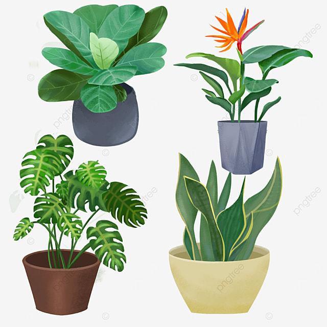 common beautiful indoor green plants in pot