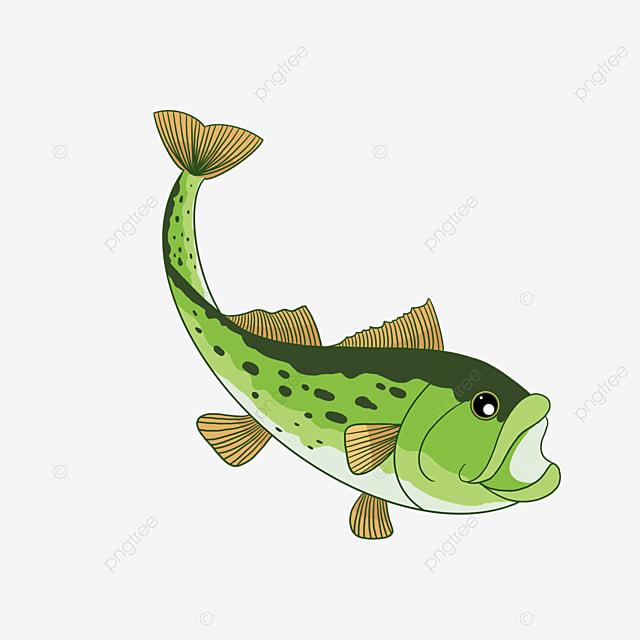 freshwater perch clip art