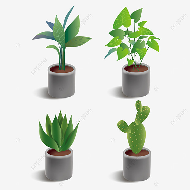 green plant indoor potted combination