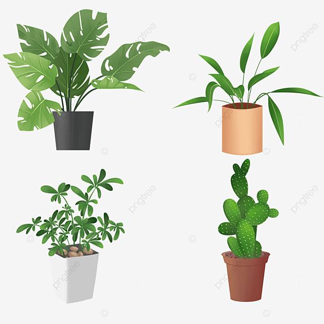 indoor green plants potted combination