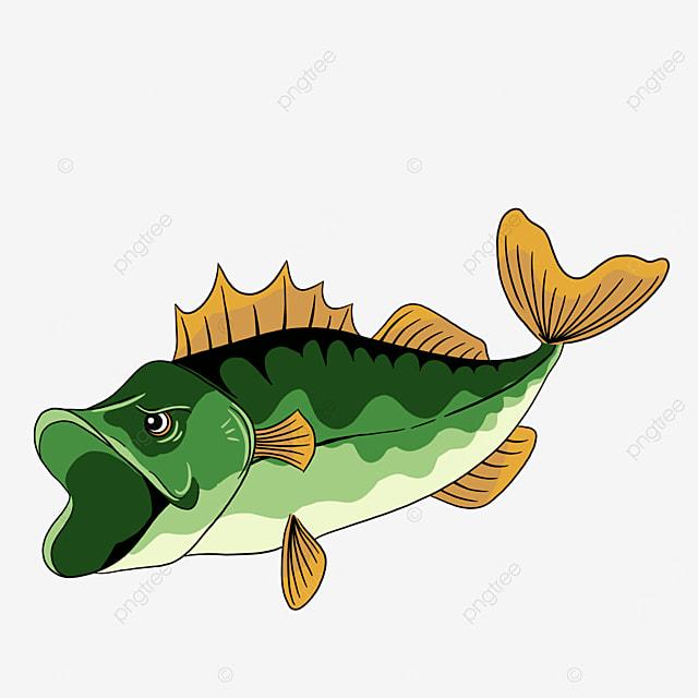 largemouth bass clip art