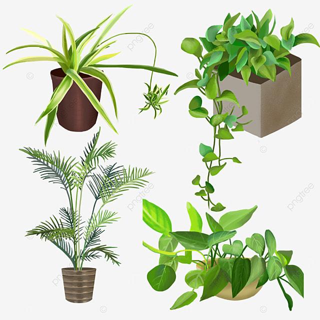 net celebrities love potted indoor plants