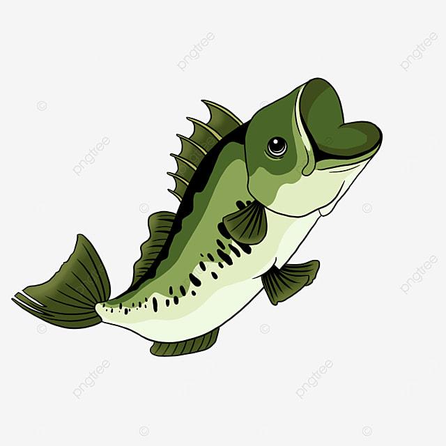 nutritional sea bass clip art