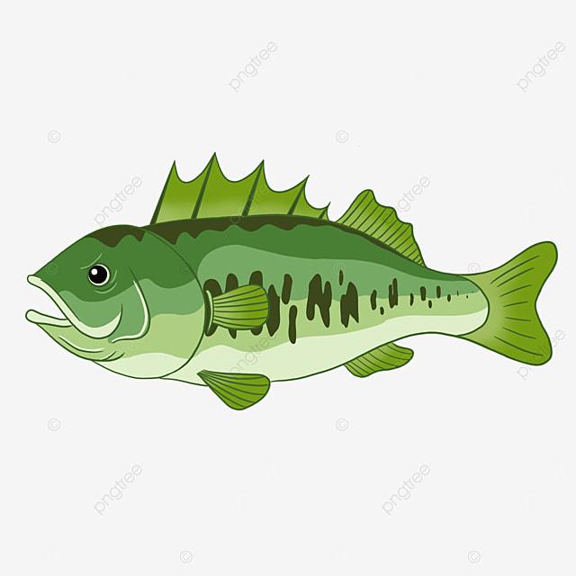 sea bass clip art