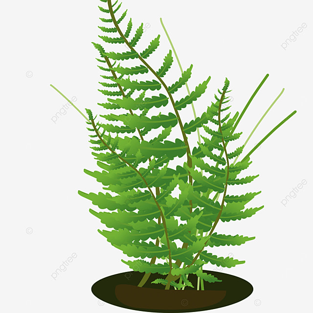 field plant grass cluster of fern clipart
