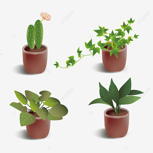 green indoor potted plant combination