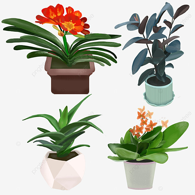 indoor green plant potted clivia plant aloe