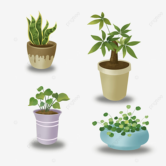 indoor green plants potted plants clipart