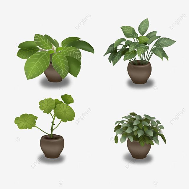 indoor green plants potted