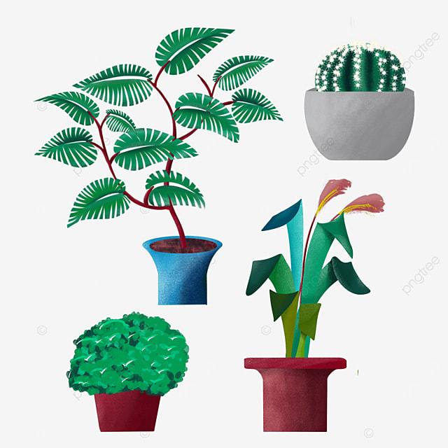 indoor plants bonsai potted plants