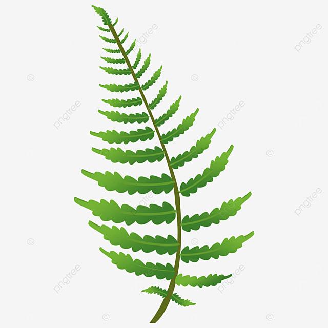 plant a leaf fern clipart