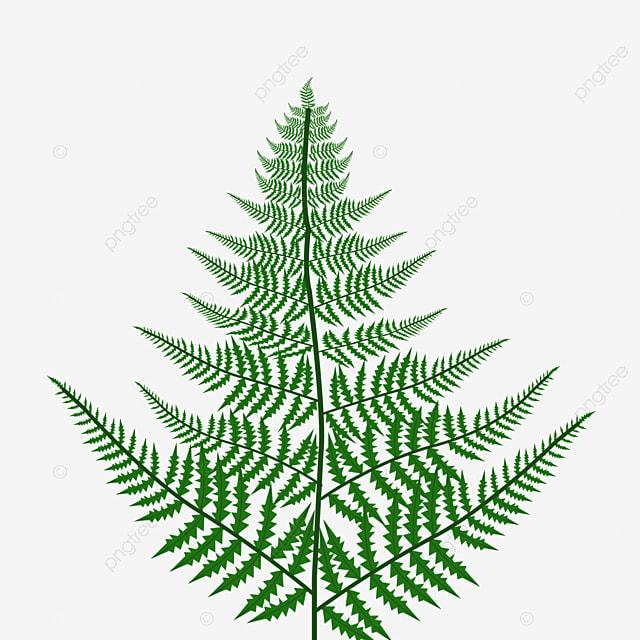 spring plant leaf fern clipart wild