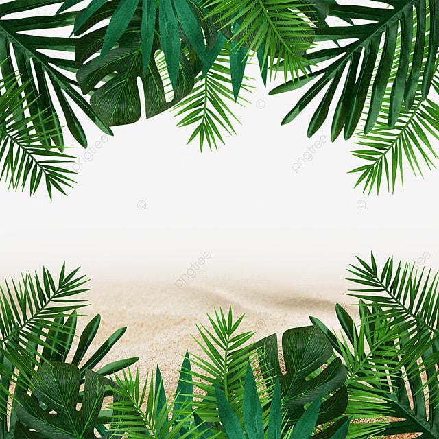 summer beach summer tropical green leafy plants