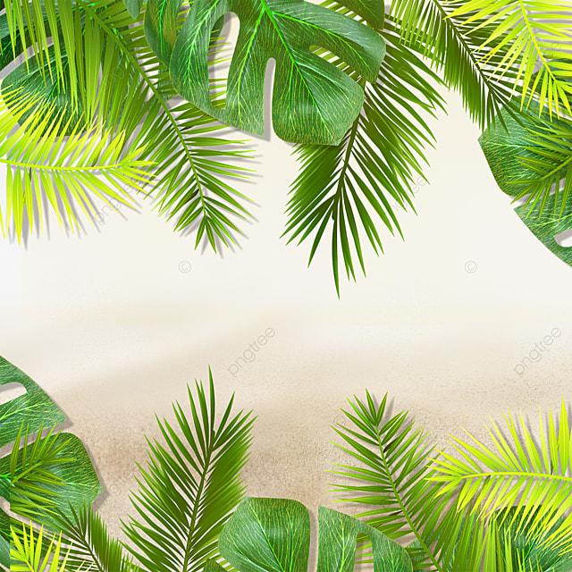 summer green plants beach tropical green plants
