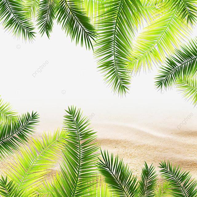 summer tropical green plants green plants beach