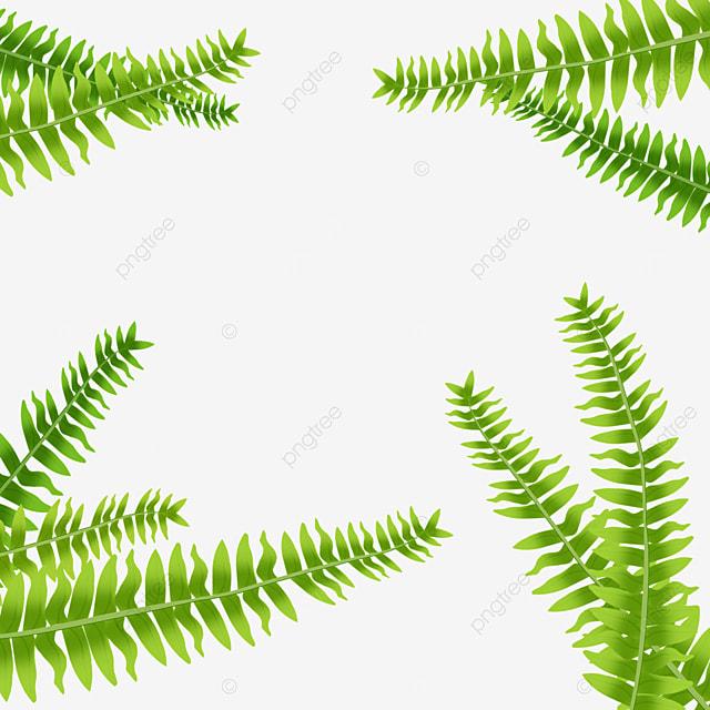 wild jungle border background fern clipart