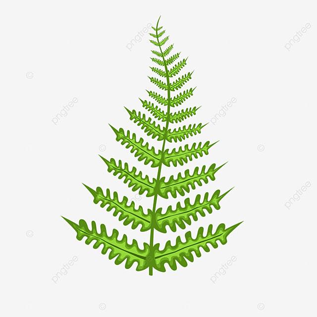 dark green fern clipart