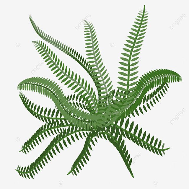 fern green clip art