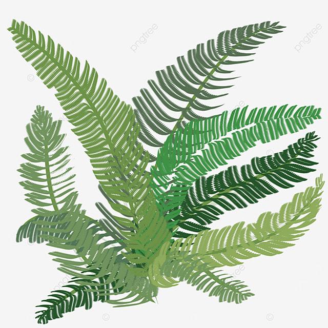green fern clipart