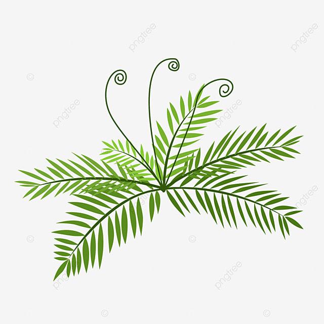 hairy fern clip art