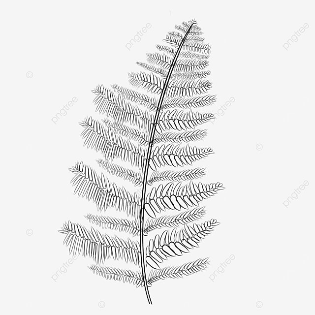 light gray fern clipart