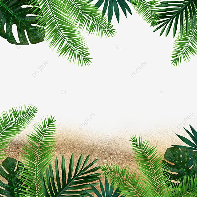 summer plants beach green leaves green plants